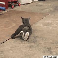 Cat doing yoga
