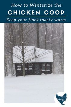 With winter fast approaching, it's important to take steps to winterize the chicken coop so you can keep your flock toasty warm when the temps drop! Best Egg Laying Chickens, Raising Backyard Chickens, Backyard Poultry, Keeping Chickens, Laying Hens, Backyard Farming, Urban Chicken Coop, Chicken Coop Plans, Building A Chicken Coop