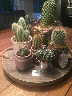 Cactus style 2018