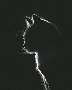 Purrfect 😻😻 From Cute Cats, Funny Cats, Animals And Pets, Cute Animals, Cat Profile, Black Paper Drawing, Photo Chat, Cat Photography, Beautiful Cats