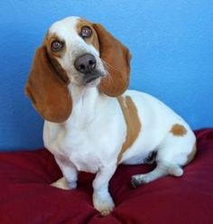 For adoption in Tucson  Location : 3450 N. Kelvin Blvd.   Tucson, AZ 85716  Phone: 520.321.3704