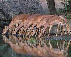 .|.    Kruger National Park- South Africa