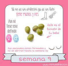 http://blog.mimuselina.com/2014/10/semana-9-embarazo-tamano-y-evolucion.html #semana9 #embarazo #embarazada, #gestacion #embarazada9semanas