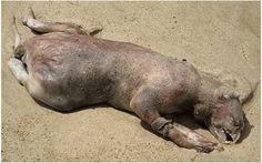 Confira 8 monstros marinhos que já apareceram nas praias pelo mundo