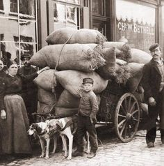 1917 : A loaded cart pulled by two dogs in Belgium during WW1  Horses in World War I were used by the belligerent nations for transportation of troops, artillery, materiel, and, to a lesser extent, in mobile cavalry troops. Due to lack of Horses, most carts in France, Germany and Belgium were pulled by dogs.