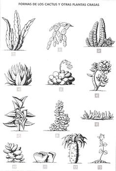 Formas de los cactus Se puede establecer diferentes tipos de cactus según su silueta, y esta es también una forma sencil...