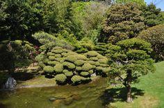Japanese Tea Garden Golden Gate Park, San Francisco, Japanese, Tea, Fruit, Awesome, Garden, Beautiful, Garten