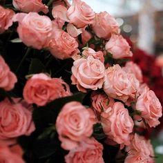 © Avril Louise - Winter with flowers #paris #galerieslafayette #roses #flowers #fleurs