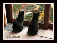 cats of Bruges | dreaming..... | merge of photo cat (brugge) and fish (Hasse ...