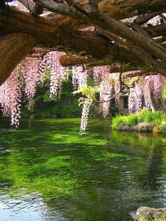 an arbor of pink over a pond