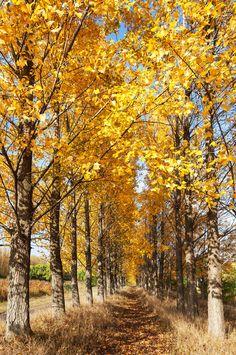 Fall Foliage (Hungary) by Csilla Zelko