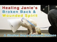 Healing A Shelter Dogs Broken Back And Wounded Spirit - PLEASE SHARE
