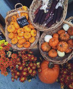 autumn, fall, and pumpkin image oktober Autumn Cozy, Autumn Fall, Autumn Feeling, Fall Mums, Autumn Aesthetic, Happy Fall Y'all, Hello Autumn, Fall Harvest, Bountiful Harvest
