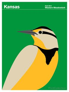 The Western Meadowlark is a common songbird in open country well across the majority of the western part of the North American continent. Part of the family of blackbirds and orioles, the adults have