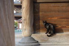 猫 ネコ ねこの日々   じぇいなすと、うちニャンズ+外猫いっぱい   ページ 5