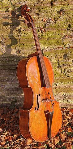 Hey, I found this really awesome Etsy listing at https://www.etsy.com/listing/483825996/early-1800-s-english-cello-suggested