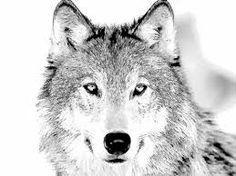 Wolf Head Sketch