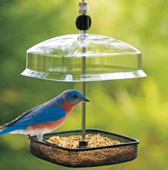 Meal Worm feeders are quickly becoming a popular bird feeder and help to attract Bluebirds!