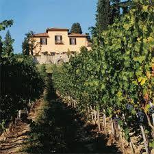 Wine tasting & olive oil tasting at Fattoria - Il Poggio, Montecarlo Italy