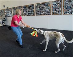Tug O' War can sometimes be controversial.  The Whole Dog Journal takes a look at how this type of play can be a great reinforcer.