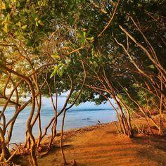 Amanecer junto a la ciénaga y junto al mar Caribe en Barú, Colombia  #travel
