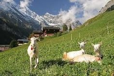 swiss culture - Google Search