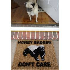 Honey Badger don't give a shit!  Hilarious.