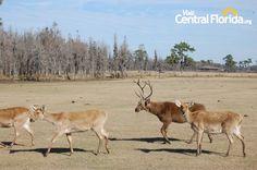 Safari Wilderness- Lakeland, FL, Central Florida