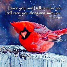 ISAIAH 46:4 - Even to your old age and gray hairs, I am He, I am He who will sustain you. I have made you and I will carry you; I will sustain you and I will rescue you.