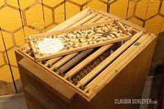 Claudia Schleyer Interaktive Exponate   Interactive Exhibits   Hands-on Bees Exhibition