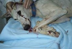 No más maltrato a los perros (no more cruelty to dogs) | Please SIGN and share petition. Thanks.