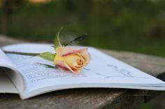 Love books #love #flowers #books #livros #rosas #lovebooks
