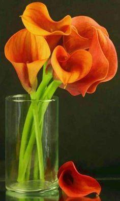 Red-Orange Calla Lilly's