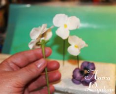 Gumpaste (fondant, polymer clay) Heartsease (Viola tricolor, Pansy) flower making tutorials - Мастер-классы по украшению тортов Cake Decorating Tutorials (How To's) Tortas Paso a Paso