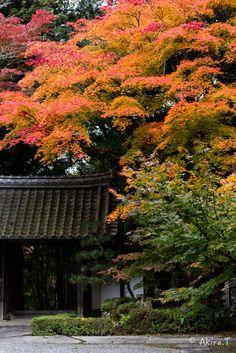 11月7日の紅葉撮影、今回のアップは積善寺... 少し早いと予想した通りの色付き状態でしたが、ここも無人でしたよ〜      * 画像クリックで拡...