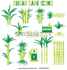 Find Sugar Cane Icons Vector stock images in HD and millions of other royalty-free stock photos, illustrations and vectors in the Shutterstock collection. Logo Design Tutorial, Design Tutorials, Design Ideas, Arte Bar, Sugar Cane Plant, Sugarcane Juice, Planner Doodles, Tree Icon, Tree Logos