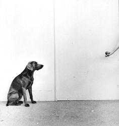 William Wegman, Ball Game, 1973