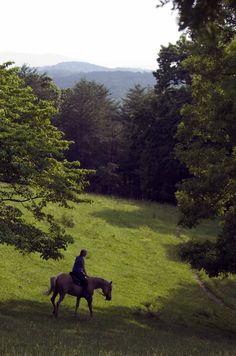 Horseback Riding in Cashes Valley - Blue Ridge, GA