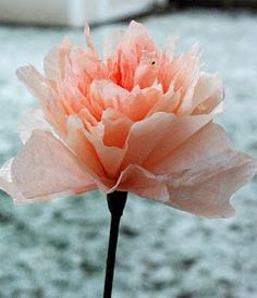 DIY coffee filter flowers This has the how to directions on making these pretty flowers. Coffee Filter Roses, Coffee Filter Crafts, Coffee Filters, Coffee Filter Wreath, Faux Flowers, Diy Flowers, Pretty Flowers, Fabric Flowers, Flowers Garden