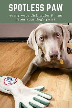 Spotless Paw Review - This is an easy way to clean mud & dirt from your dog's paws, perfect for dog walkers & pet sitters to keep in their cars