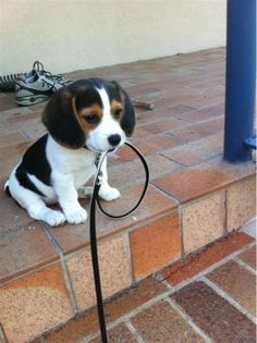 A lovely puppy! - Seen while browsing the web & looking for another pic! Thanks olsenpartners