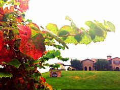 Now this is the kind of autumn you've been dreaming of...  #childresswines #autumn