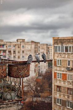 Birds in Tbilisi, Georgia by Mikheil Pitiurishvili on 500px