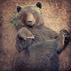 Posturitas #oso #postureo #cabarceno