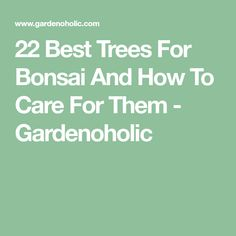 22 Best Trees For Bonsai And How To Care For Them - Gardenoholic