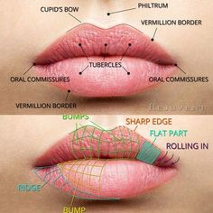 So just like the skin on your face body the skin on your lips ages too With aging comes drier lips smaller lip area diminished lip volume and more wrinkles including the. Facial Anatomy, Head Anatomy, Body Anatomy, Anatomy Drawing, Botox Fillers, Dermal Fillers, Lip Fillers, Relleno Facial, Make Up Geek