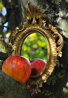 """""""Mirror, mirror on the Tree: who's the fairest of them all."""""""