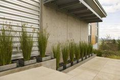 high grass in planters | Giulietti Schouten