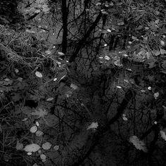 November Creek Reflections 007