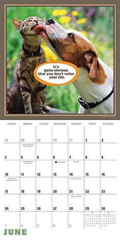 There are lots of clever quotes in this 2018 Cat Chat calendar! Buy yours now from purrfectgifts. Cat Calendar, Clever Quotes, Online Gifts, Laugh Out Loud, Funny Photos, Haha, Sayings, Life, Intelligent Quotes